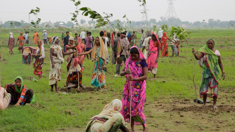 India: 50 million trees were planted in just 24 hours